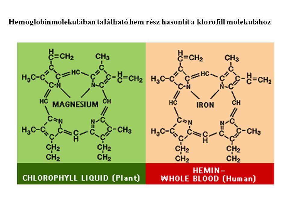 Hemoglobinmolekulában található hem rész hasonlít a klorofill molekulához