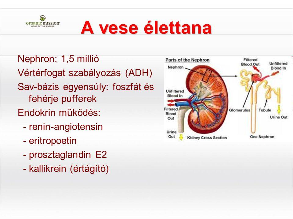 A vese élettana Nephron: 1,5 millió Vértérfogat szabályozás (ADH)