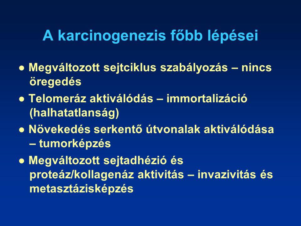 A karcinogenezis főbb lépései