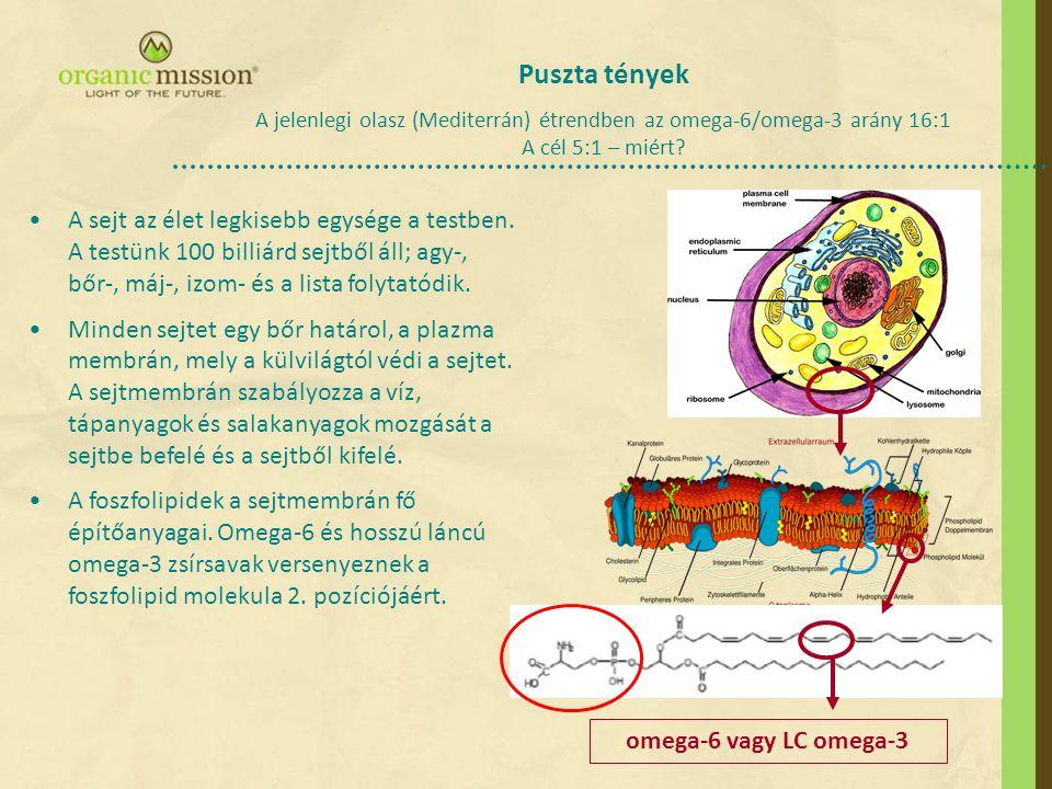 Puszta tények A jelenlegi olasz (Mediterrán) étrendben az omega-6/omega-3 arány 16:1 A cél 5:1 – miért