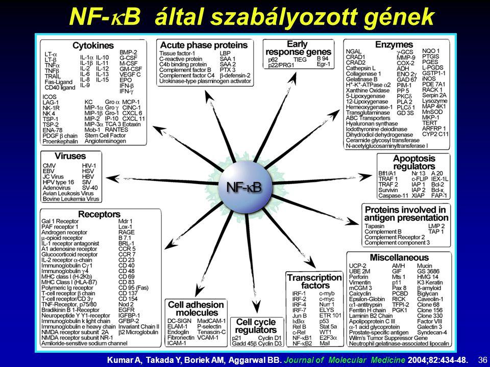 NF-kB által szabályozott gének