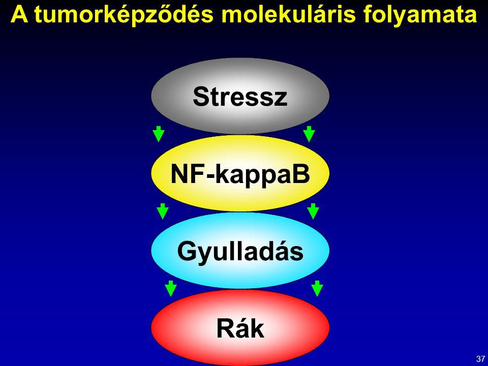 A tumorképződés molekuláris folyamata