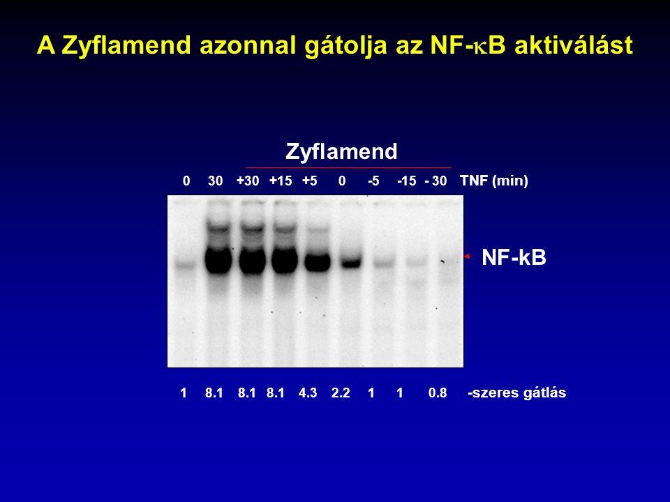 A Zyflamend azonnal gátolja az NF-B aktiválást