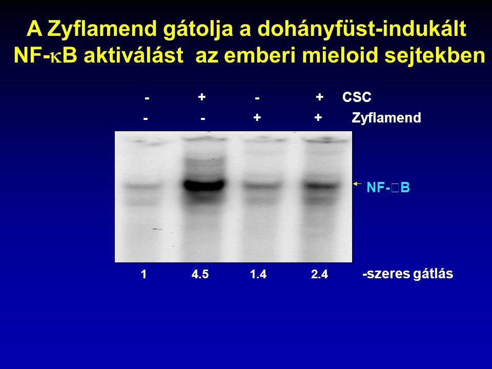 A Zyflamend gátolja a dohányfüst-indukált