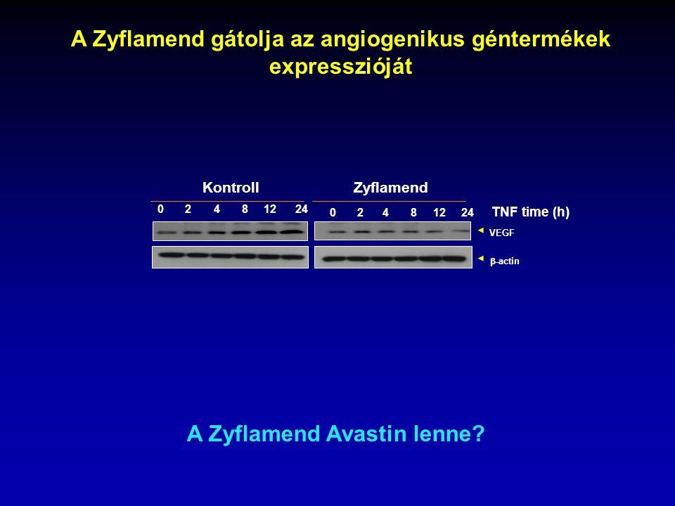 A Zyflamend gátolja az angiogenikus géntermékek expresszióját