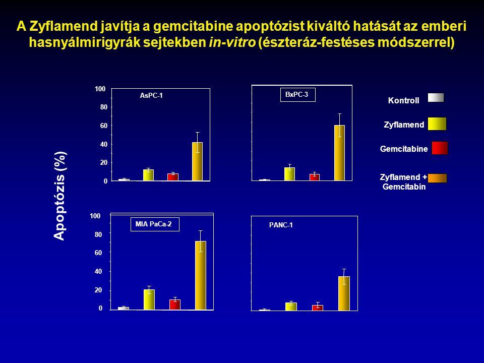 A Zyflamend javítja a gemcitabine apoptózist kiváltó hatását az emberi hasnyálmirigyrák sejtekben in-vitro (észteráz-festéses módszerrel)