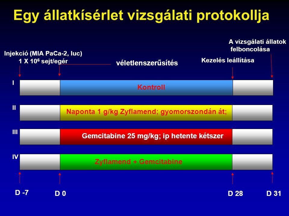 Injekció (MIA PaCa-2, luc)