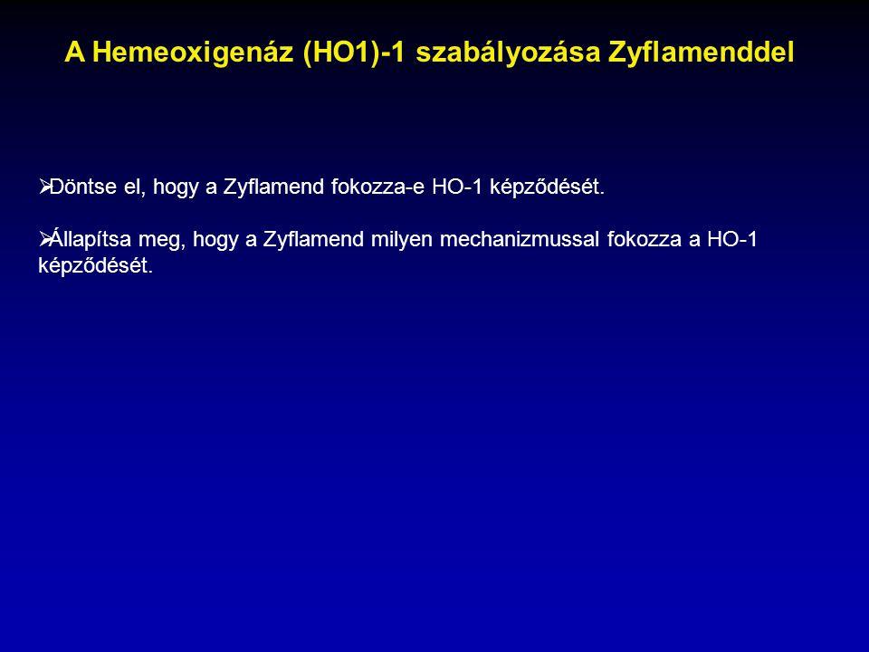 A Hemeoxigenáz (HO1)-1 szabályozása Zyflamenddel
