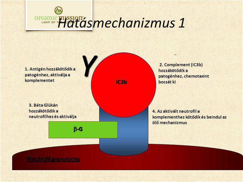 Y Hatásmechanizmus 1 iC3b b-G Neutrofil granulocita