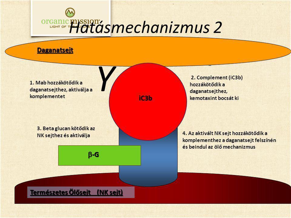 Y Hatásmechanizmus 2 Daganatsejt iC3b b-G