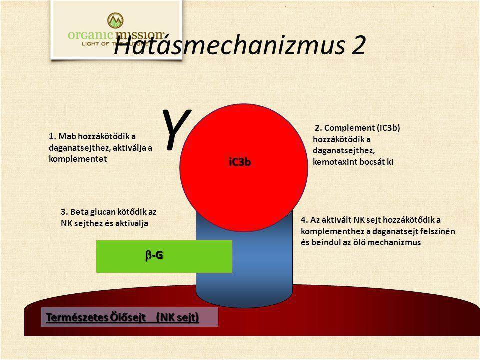 Y Hatásmechanizmus 2 iC3b b-G Természetes Ölősejt (NK sejt)