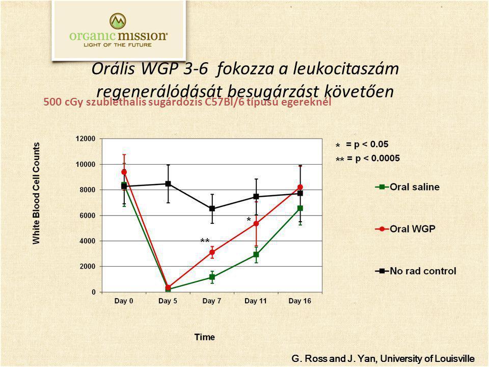 Orális WGP 3-6 fokozza a leukocitaszám regenerálódását besugárzást követően