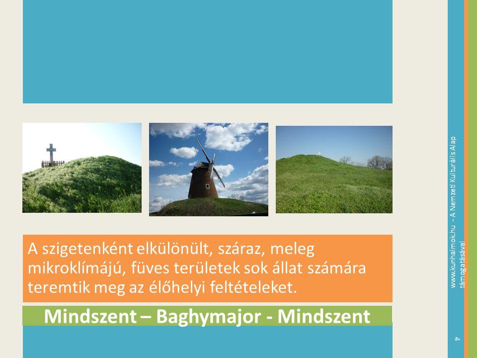 Mindszent – Baghymajor - Mindszent