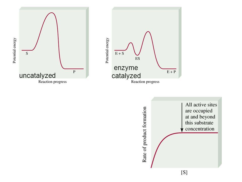 uncatalyzed enzyme catalyzed