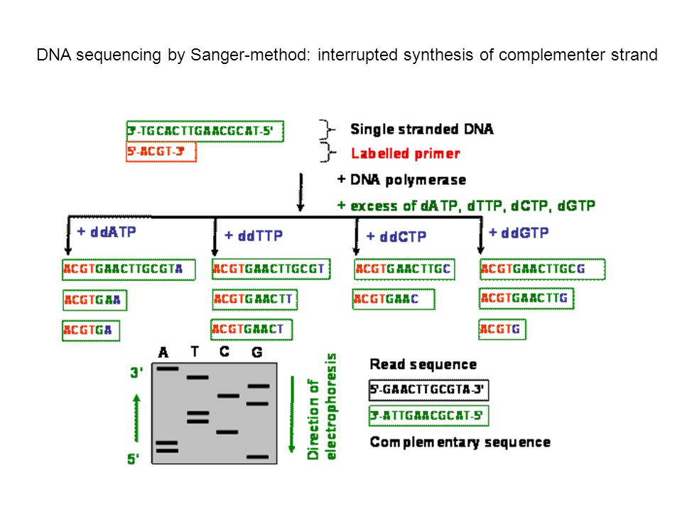 DNA sequencing by Sanger-method: interrupted synthesis of complementer strand