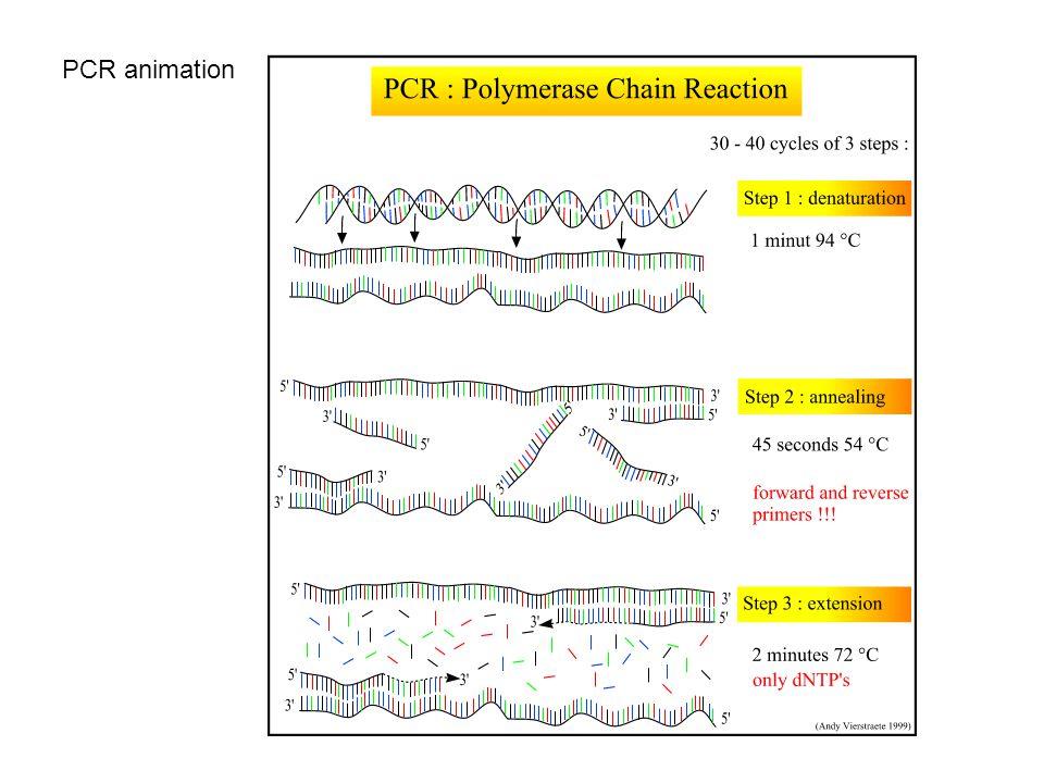 PCR animation