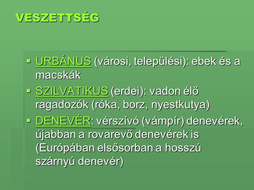 VESZETTSÉG URBÁNUS (városi, települési): ebek és a macskák. SZILVATIKUS (erdei): vadon élő ragadozók (róka, borz, nyestkutya)
