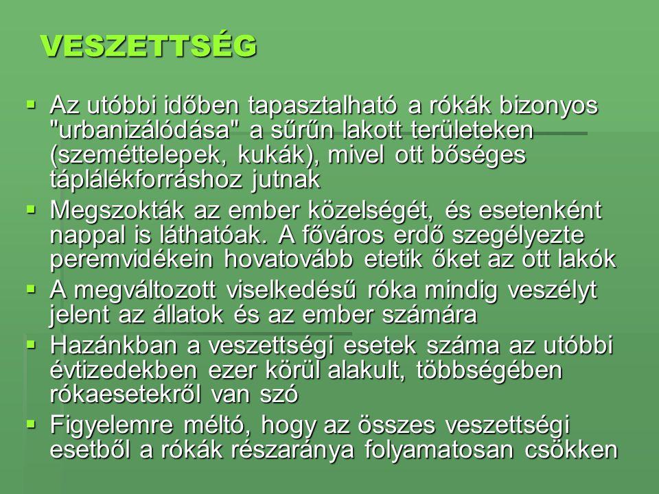 VESZETTSÉG