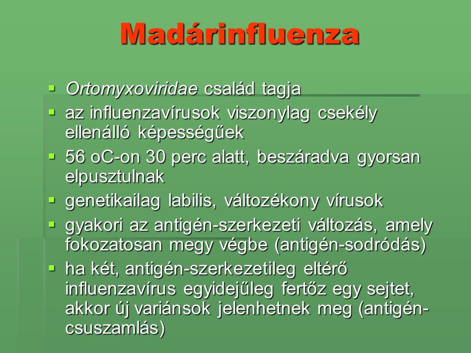 Madárinfluenza Ortomyxoviridae család tagja