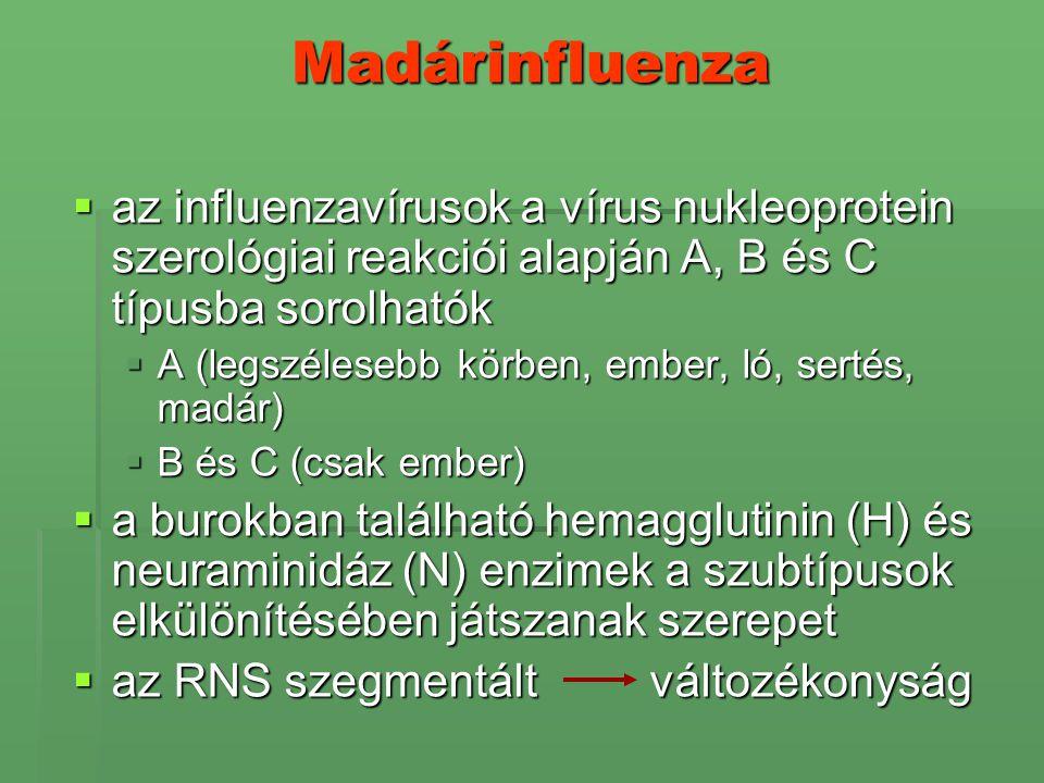 Madárinfluenza az influenzavírusok a vírus nukleoprotein szerológiai reakciói alapján A, B és C típusba sorolhatók.