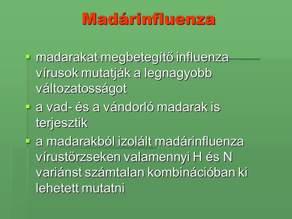 Madárinfluenza madarakat megbetegítő influenza vírusok mutatják a legnagyobb változatosságot. a vad- és a vándorló madarak is terjesztik.
