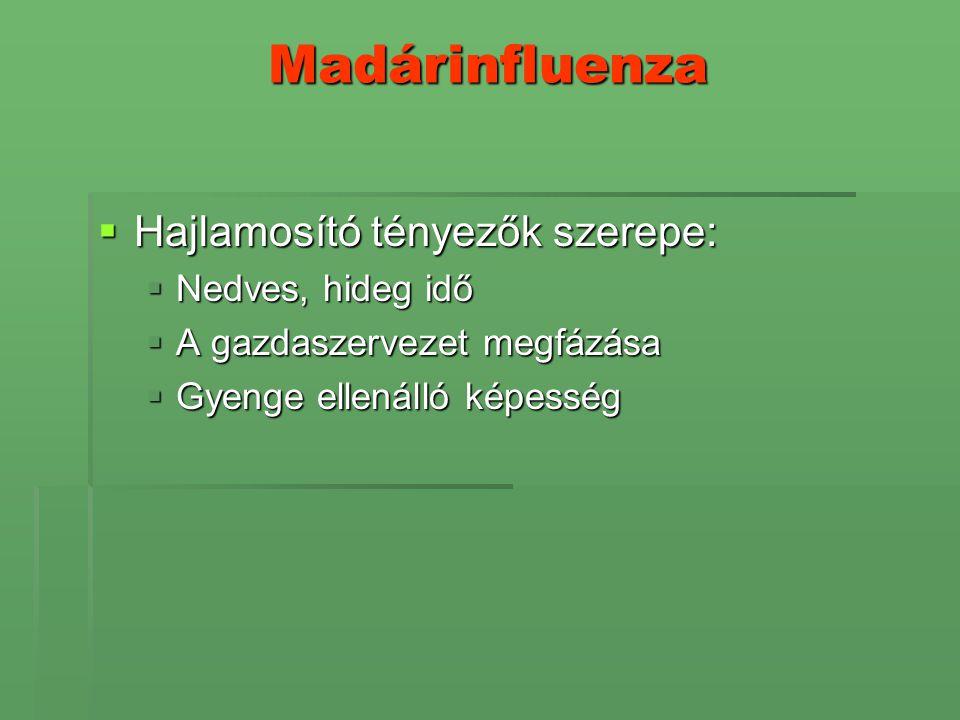 Madárinfluenza Hajlamosító tényezők szerepe: Nedves, hideg idő