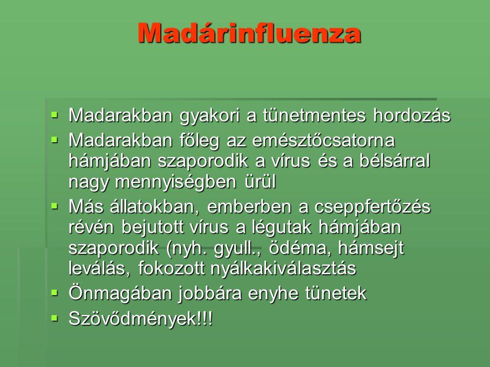 Madárinfluenza Madarakban gyakori a tünetmentes hordozás