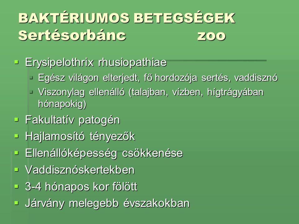 BAKTÉRIUMOS BETEGSÉGEK Sertésorbánc zoo
