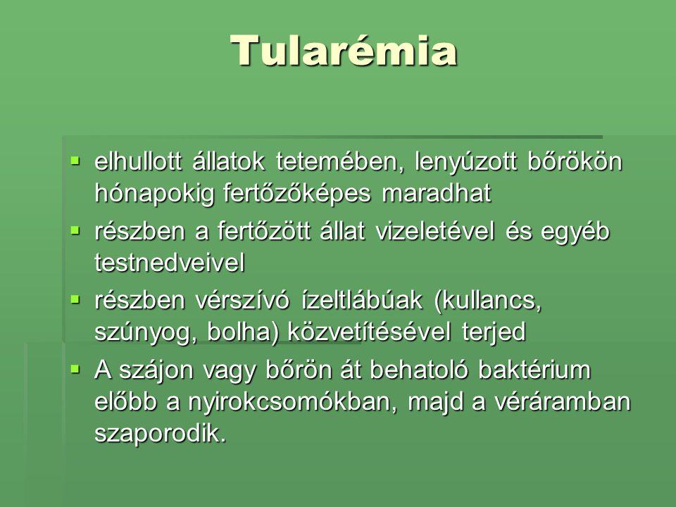 Tularémia elhullott állatok tetemében, lenyúzott bőrökön hónapokig fertőzőképes maradhat.