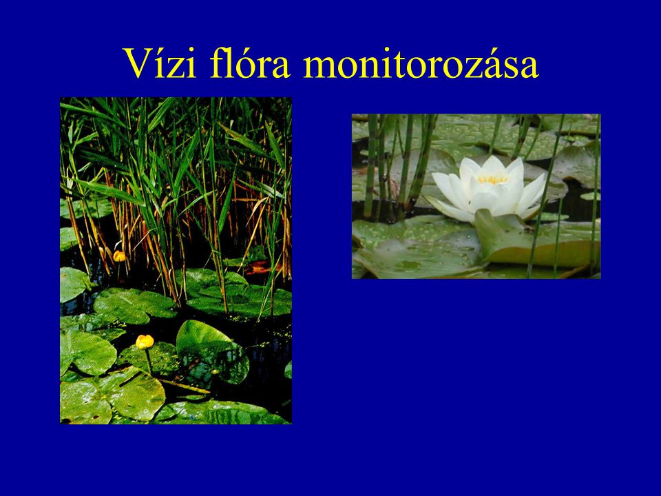 Vízi flóra monitorozása