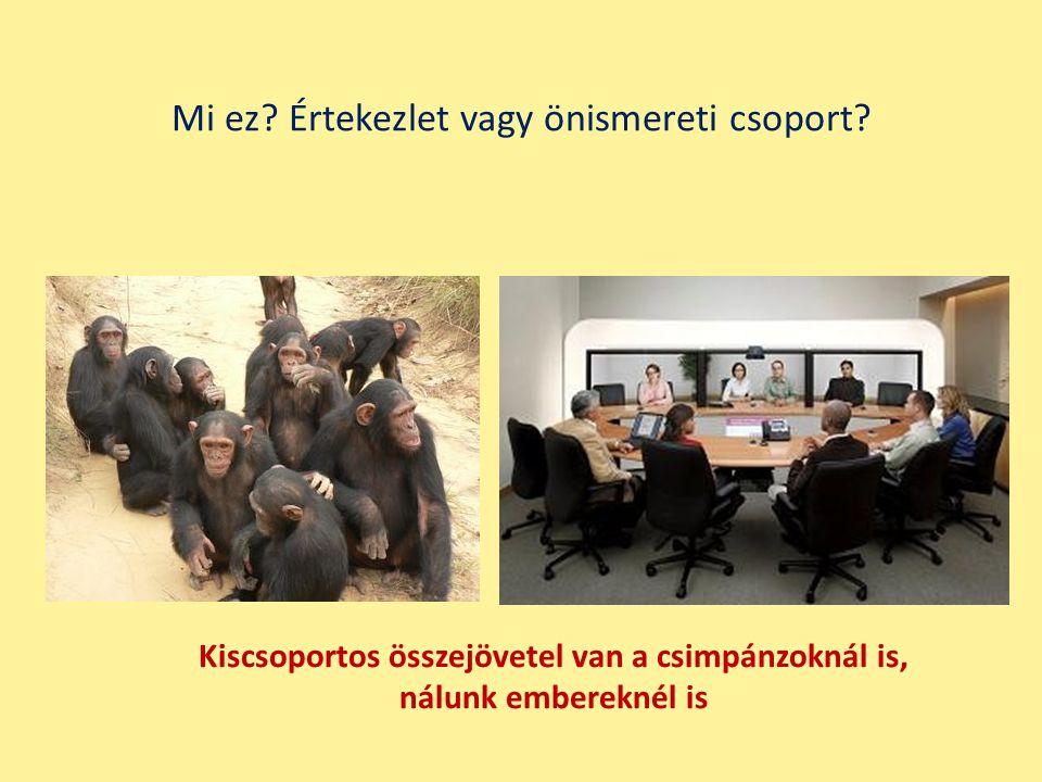 Kiscsoportos összejövetel van a csimpánzoknál is, nálunk embereknél is