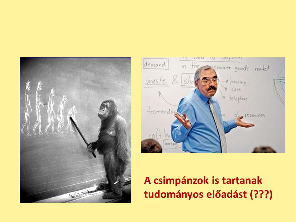 A csimpánzok is tartanak tudományos előadást ( )