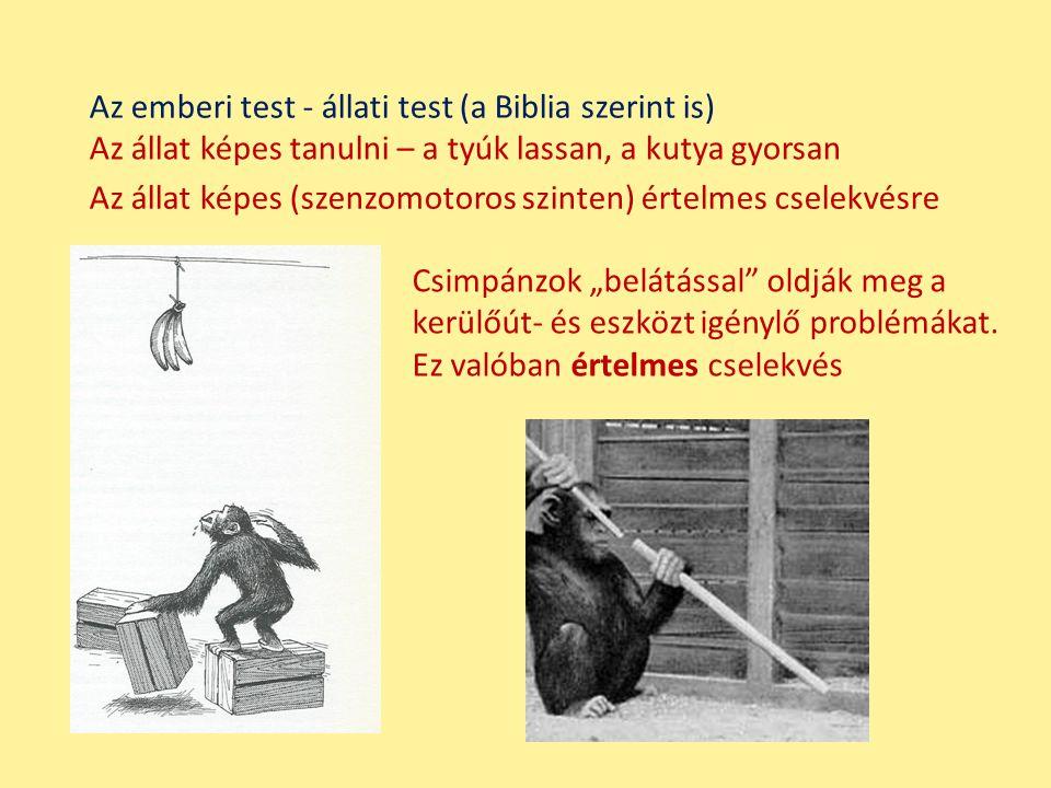 Az emberi test - állati test (a Biblia szerint is)