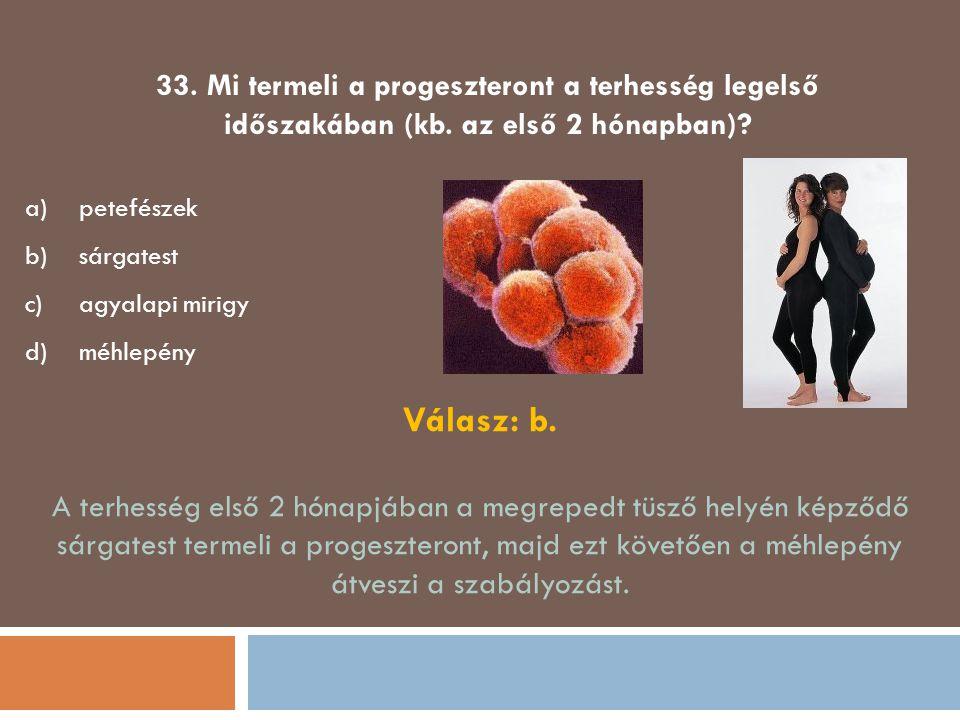 33. Mi termeli a progeszteront a terhesség legelső