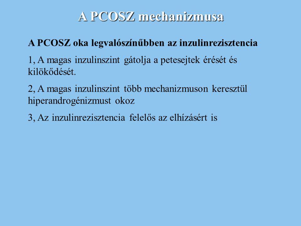 A PCOSZ mechanizmusa A PCOSZ oka legvalószínűbben az inzulinrezisztencia. 1, A magas inzulinszint gátolja a petesejtek érését és kilökődését.