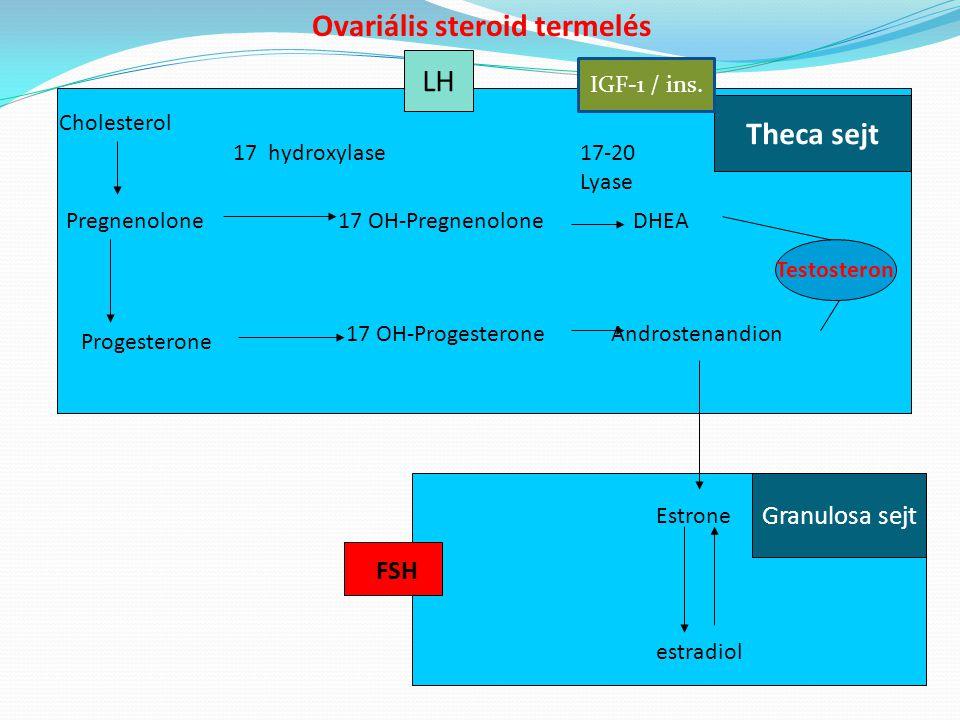 Ovariális steroid termelés