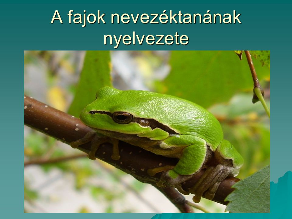 A fajok nevezéktanának nyelvezete
