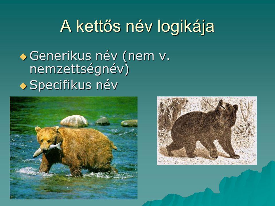A kettős név logikája Generikus név (nem v. nemzettségnév)