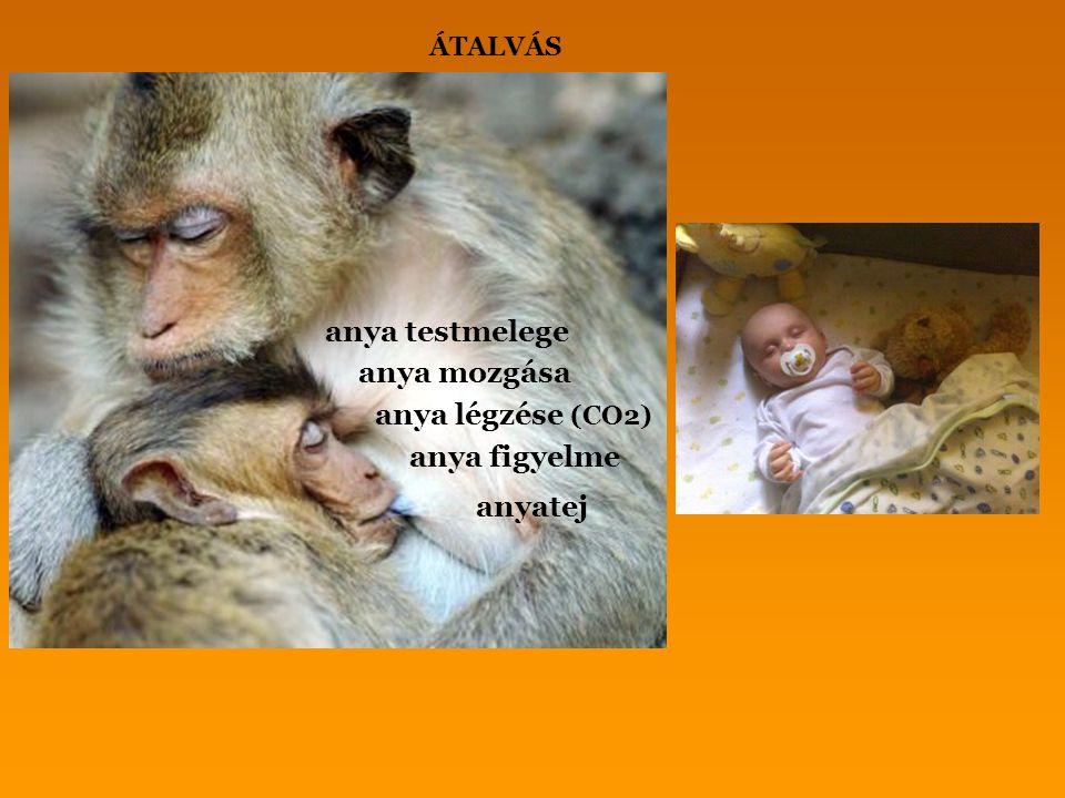 anya testmelege anya mozgása anya légzése (CO2) anya figyelme anyatej