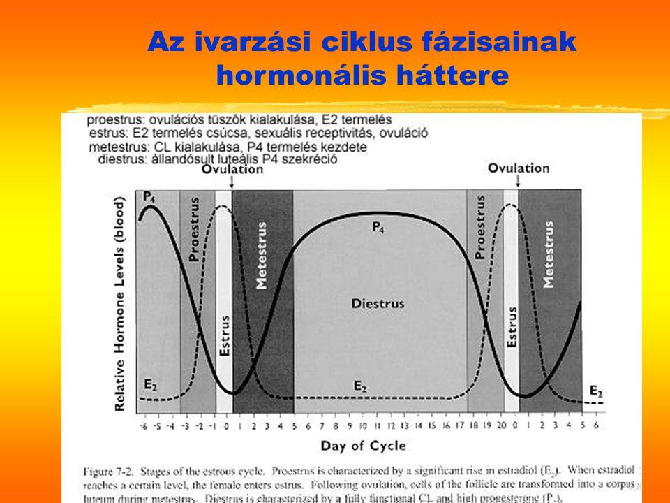 Az ivarzási ciklus fázisainak hormonális háttere