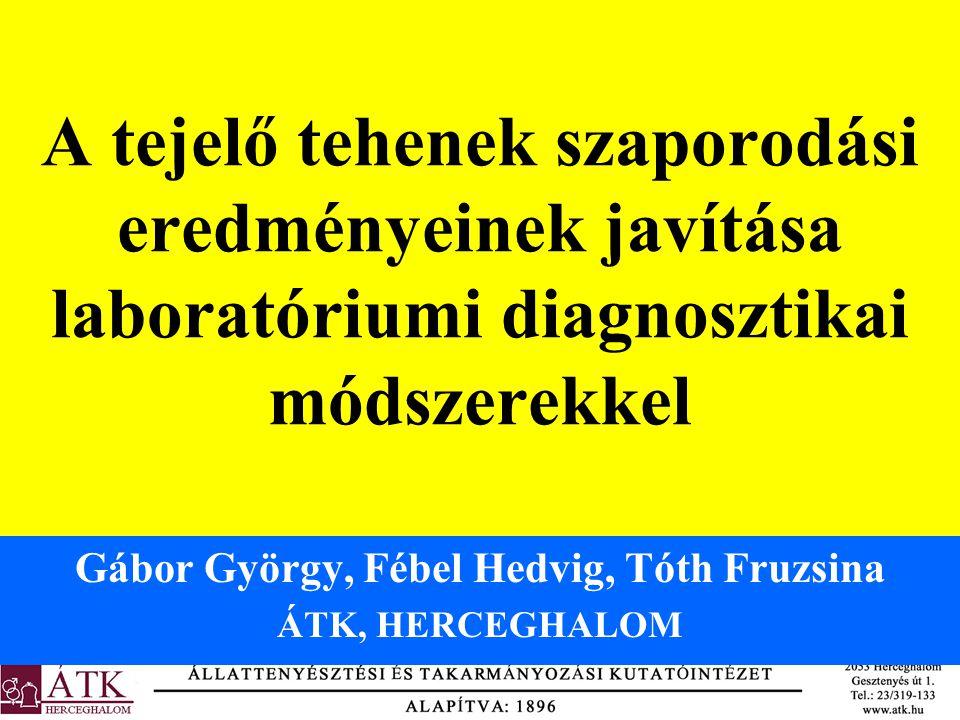 Gábor György, Fébel Hedvig, Tóth Fruzsina ÁTK, HERCEGHALOM