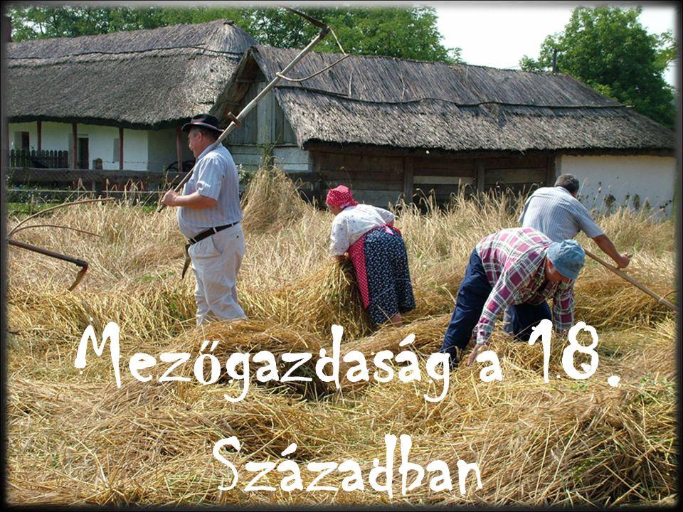 Mezőgazdaság a 18. Században