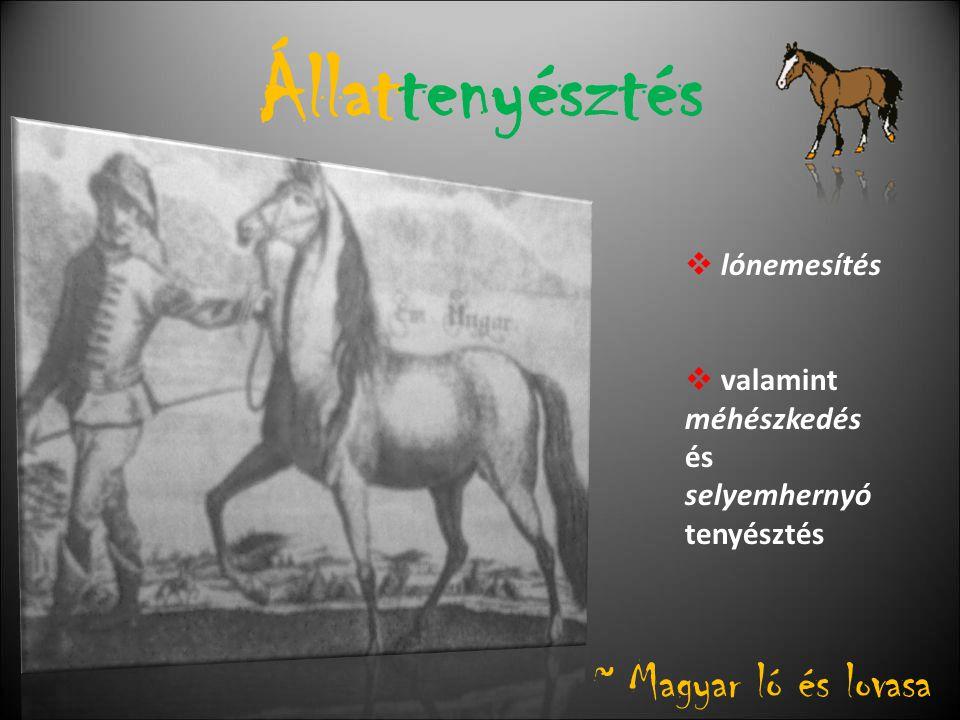 Állattenyésztés ~ Magyar ló és lovasa lónemesítés valamint méhészkedés