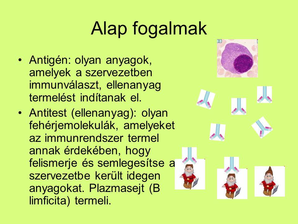 Alap fogalmak Antigén: olyan anyagok, amelyek a szervezetben immunválaszt, ellenanyag termelést indítanak el.