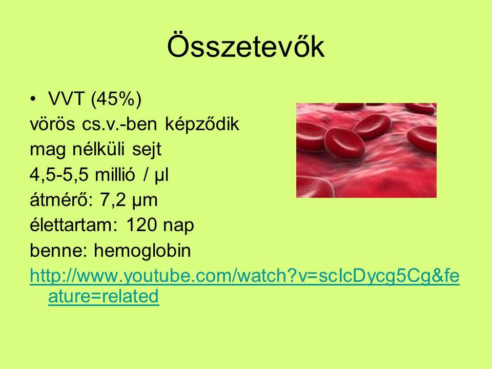 Összetevők VVT (45%) vörös cs.v.-ben képződik mag nélküli sejt
