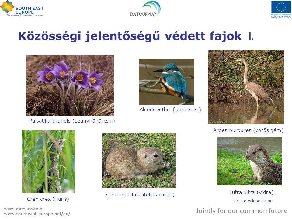 Közösségi jelentőségű védett fajok I.