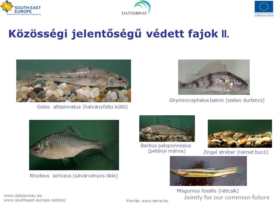 Közösségi jelentőségű védett fajok II.