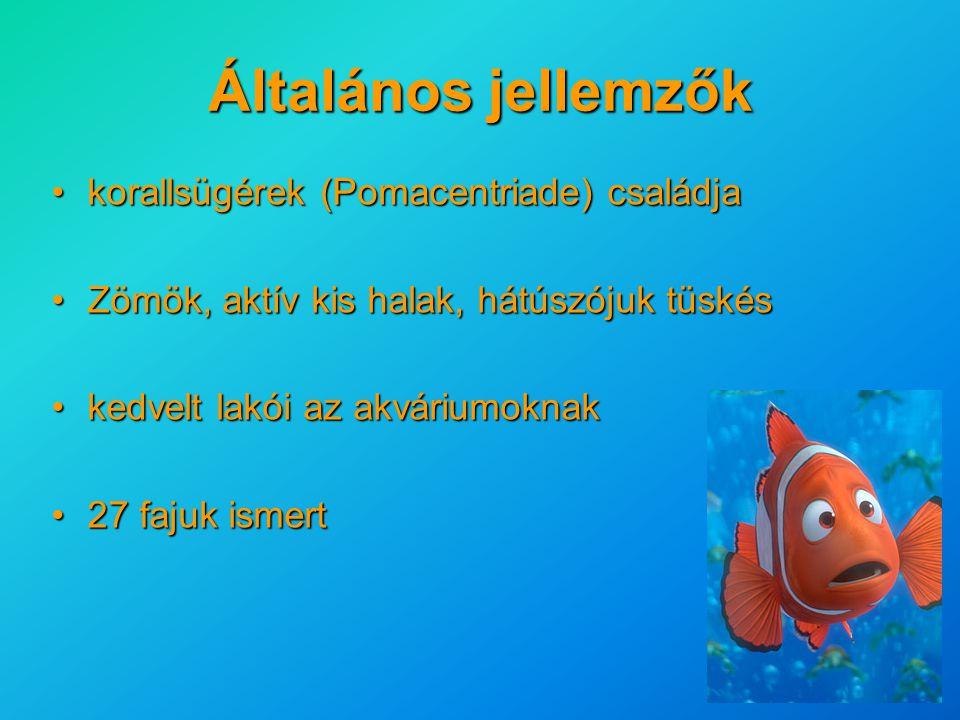 Általános jellemzők korallsügérek (Pomacentriade) családja