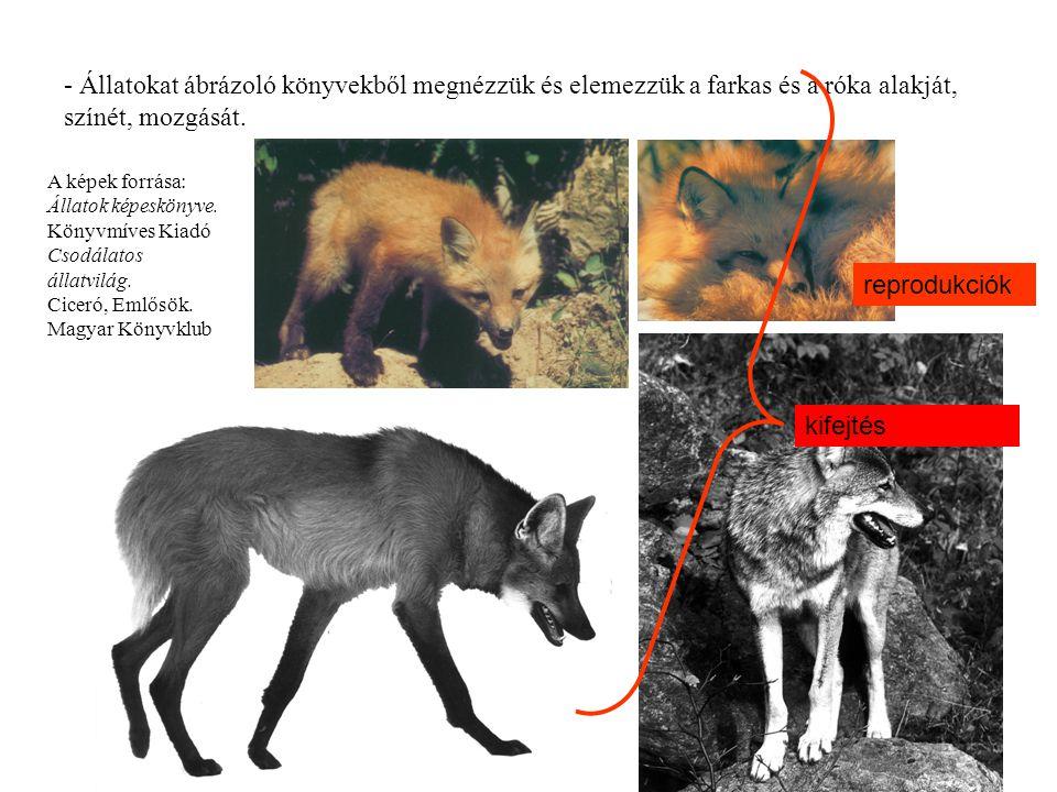 - Állatokat ábrázoló könyvekből megnézzük és elemezzük a farkas és a róka alakját, színét, mozgását.