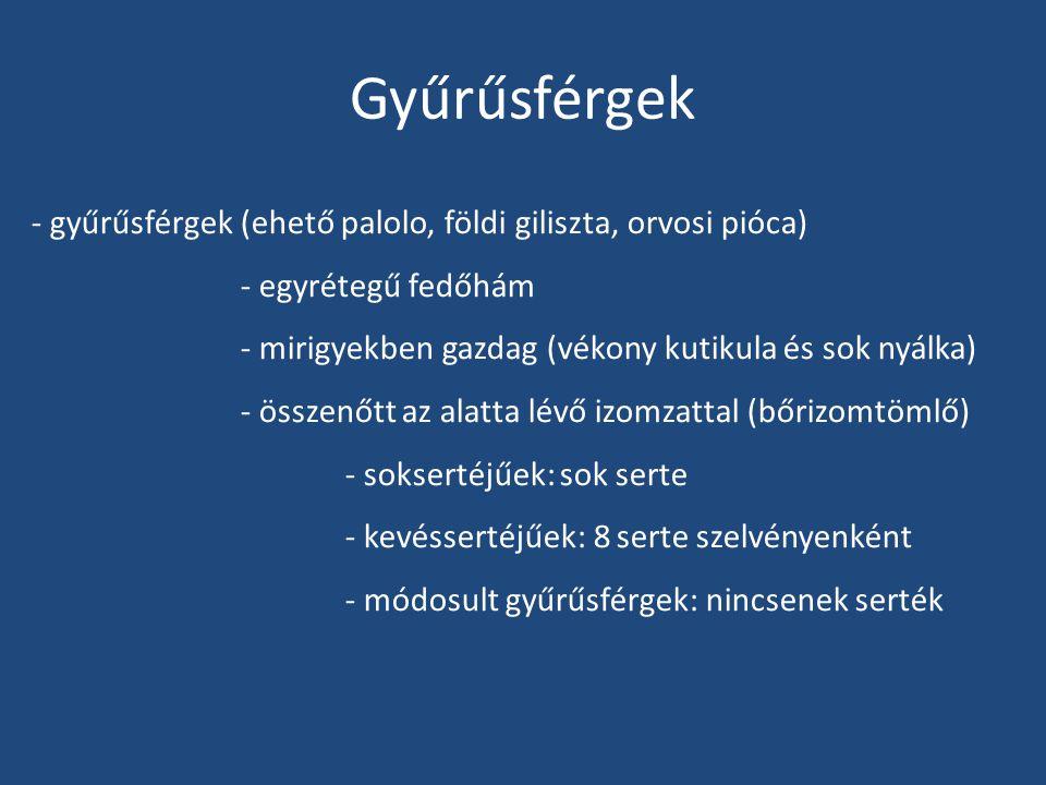 Gyűrűsférgek - gyűrűsférgek (ehető palolo, földi giliszta, orvosi pióca) - egyrétegű fedőhám. - mirigyekben gazdag (vékony kutikula és sok nyálka)